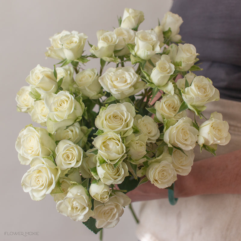 cream white spray rose