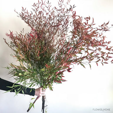 Nandina Fall Foliage greenery
