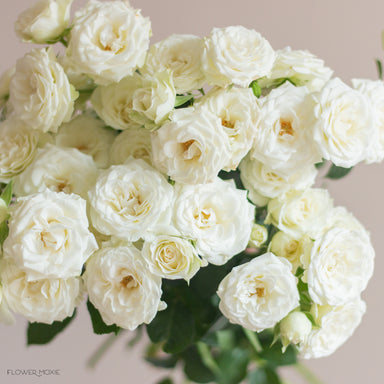 cream or white spray rose