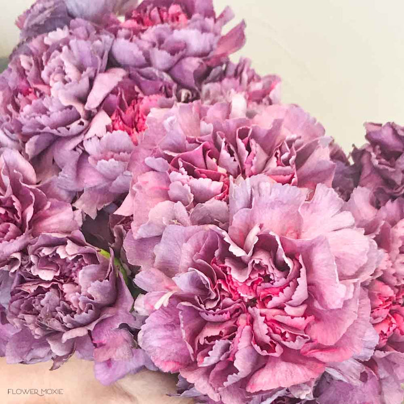 Hypnosis Lavender Carnations