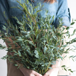 Bunch of Gunni Eucalyptus Greenery