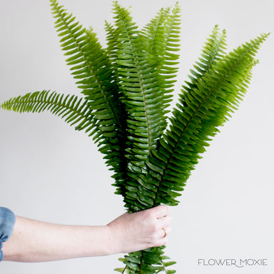 Sword Fern Greenery