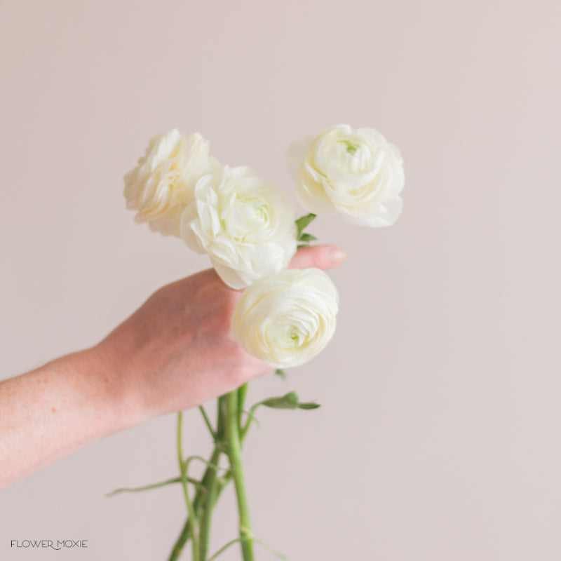 Bunch of white ranunculus flowers