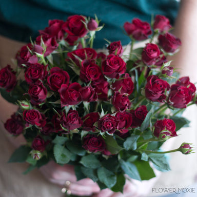 Rubicon Dark Red Spray roses burgundy