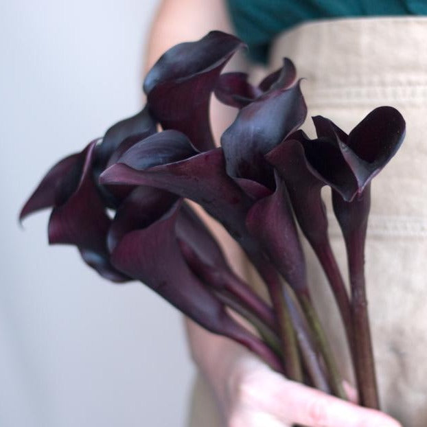 Natural Mini Calla Lily Flowers FREE SHIPPING