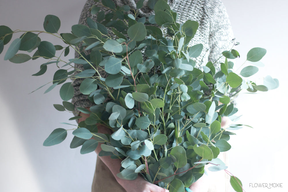 Silver Dollar Eucalyptus Bunch