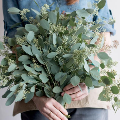 Seeded eucalyptus Greenery bunch