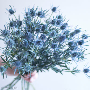 bunch of blue thistle