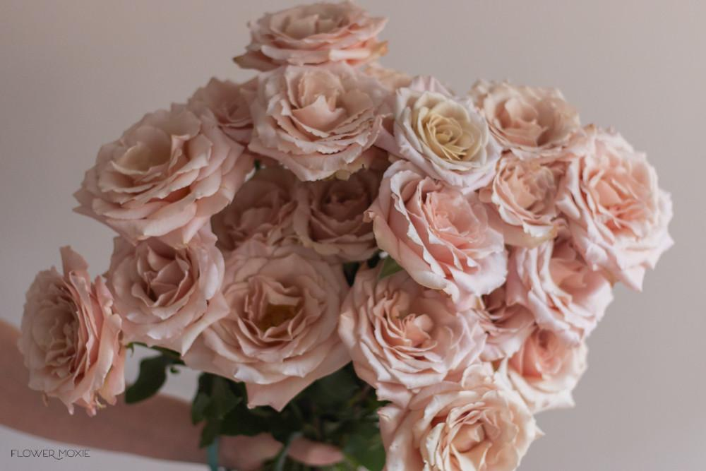 Quicksand Roses, dusty pink rose