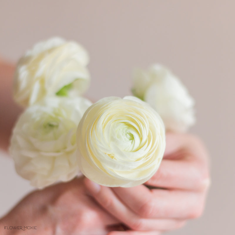 white ranunculus flower