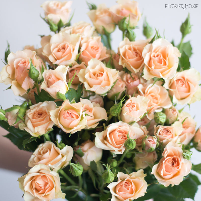 Peach Spray Rose Flowers