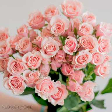 Light Pink Spray Rose Flower