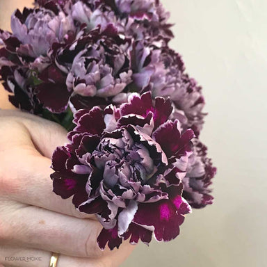 minerva burgundy carnations