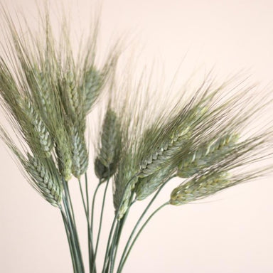fresh wheat flower for weddings