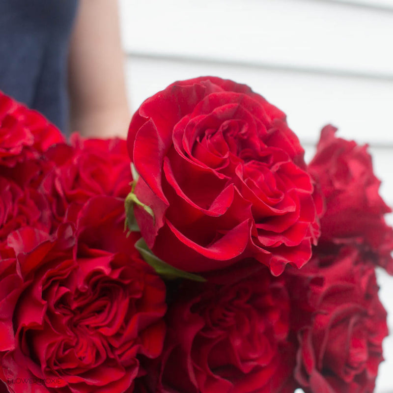 Deep Red Heart Roses