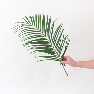 Robellini Palm Leaf Greenery