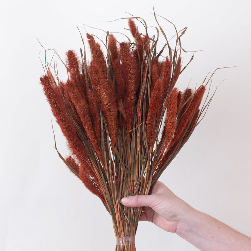 Dried Burnt Oak Setaria Grass