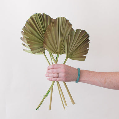 Green Burnt Sun Palm Fans for DIY Dried Weddings