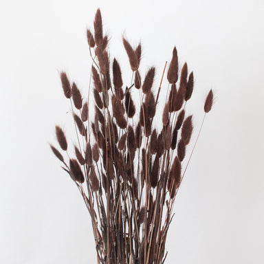 Chocolate Dried Bunny Tail Grass