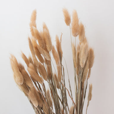 Natural Tan Dried Bunny Tail Grass