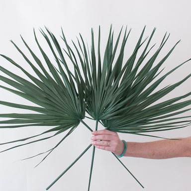 Dried Green Whole Palm Fronds