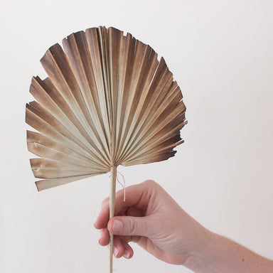 Natural Burnt Sun Palm Fans