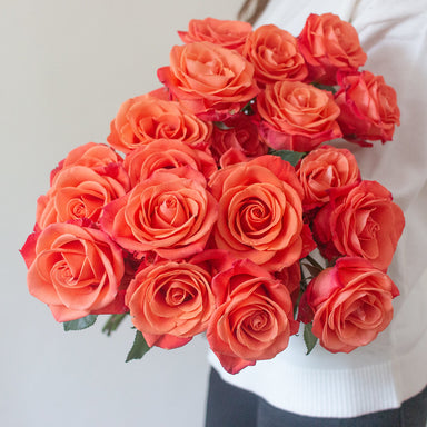 Orange Crush Roses