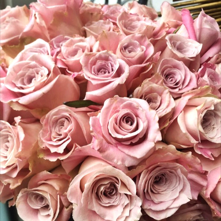 Faith Mauve Roses