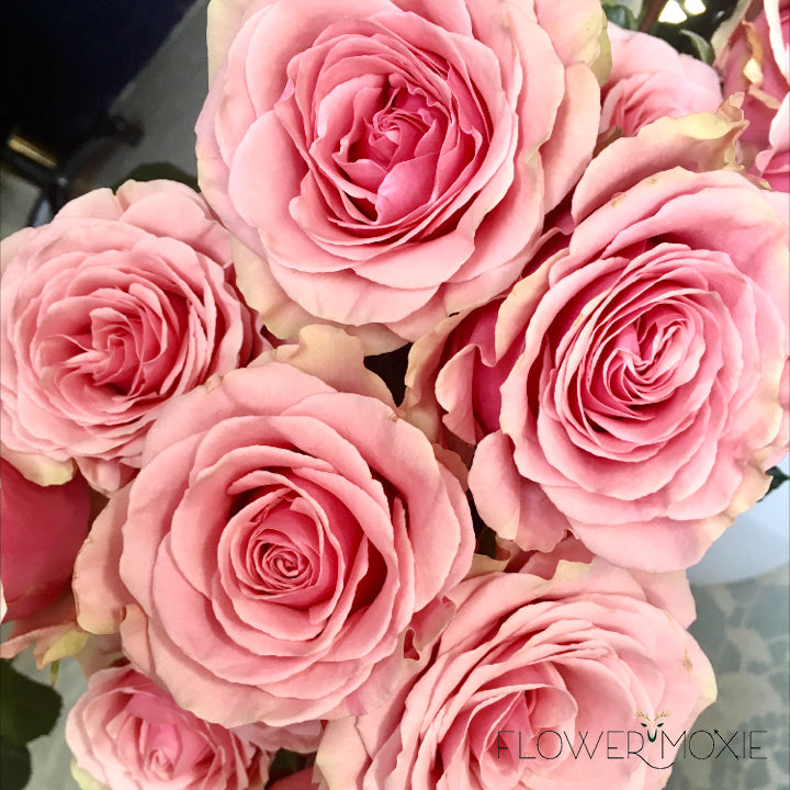 Geraldine rose | pink rose | vibrant rose | DIY bride | DIY flower ideas | DIY wedding ideas | DIY bouquet ideas | DIY bridesmaid | DIY bridal bouquet ideas | flower moxie | wedding ideas | bridesmaid ideas | how to save money wedding