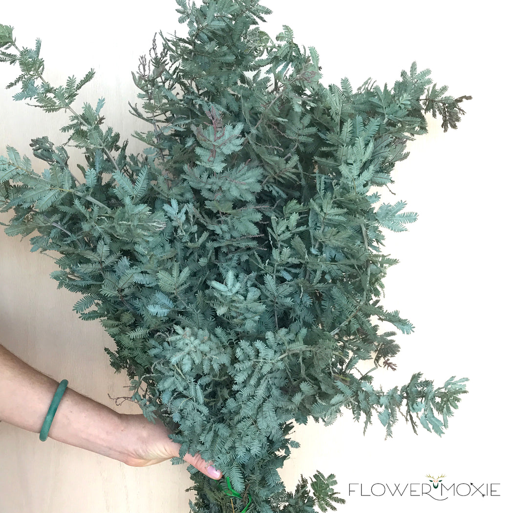 feather acacia | fern leaf acacia | DIY flowers | DIY bride | DIY bridesmaid | DIY bouquet | DIY centerpiece | DIY wedding ideas | how to save money at your wedding