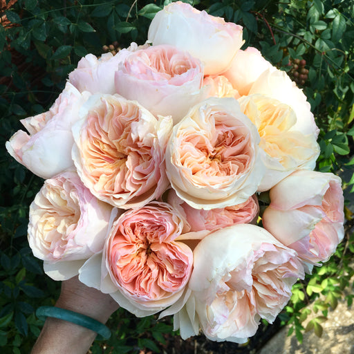 Juliet garden rose| DIY flowers | DIY bride | DIY wedding | DIY florist | DIY bridesmaid bouquet | DIY bridal shower | DIY wedding decorations | DIY bridal bouquet | blush pink rose | david austin | peach rose