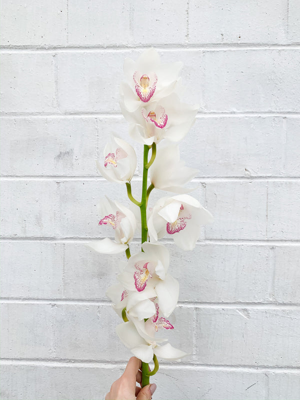 White Cymbidium Orchid Wedding Flower