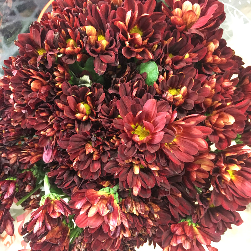 Autumn Bronze Cushion Flower