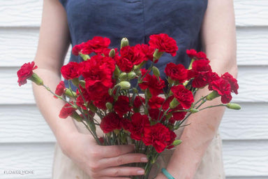 Red Mini Carnations