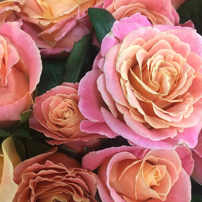 Miss Piggy rose | coral rose | pink rose | pink orange rose | vibrant rose | DIY bride | DIY flower ideas | DIY wedding ideas | DIY bouquet ideas | DIY bridesmaid | DIY bridal bouquet ideas | flower moxie | wedding ideas | bridesmaid ideas | how to save money wedding