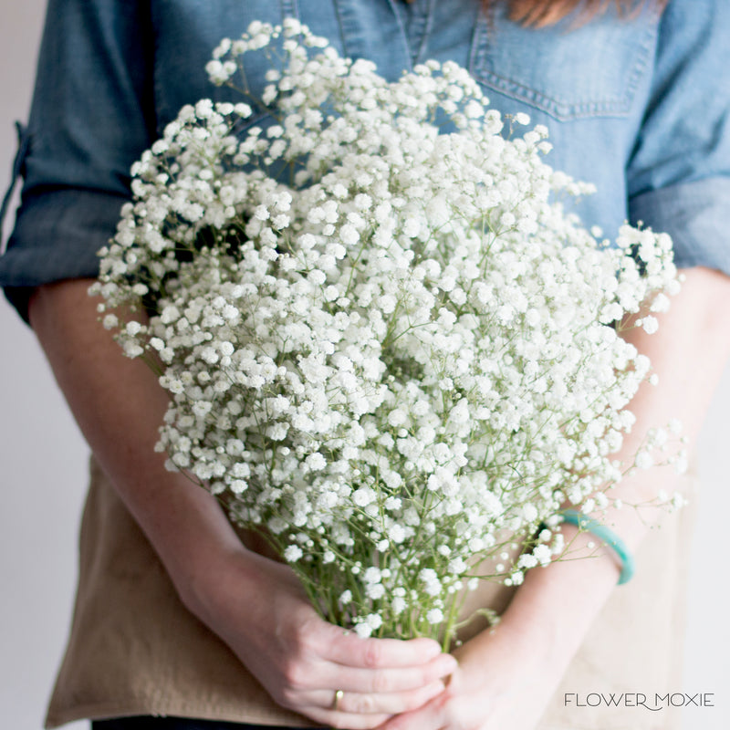 Fresh Baby S Breath Flower Bulk Fresh Wedding Flowers Online Flower Moxie