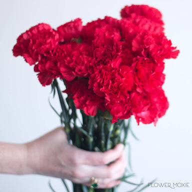 Red Carnation Flower