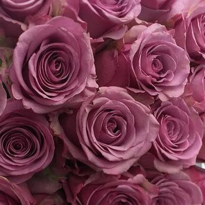 Cool Water Purple Roses