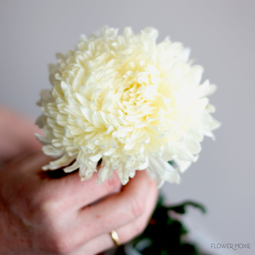 Football mum white flower moxie white football mum diy flowers flower moxie mightylinksfo