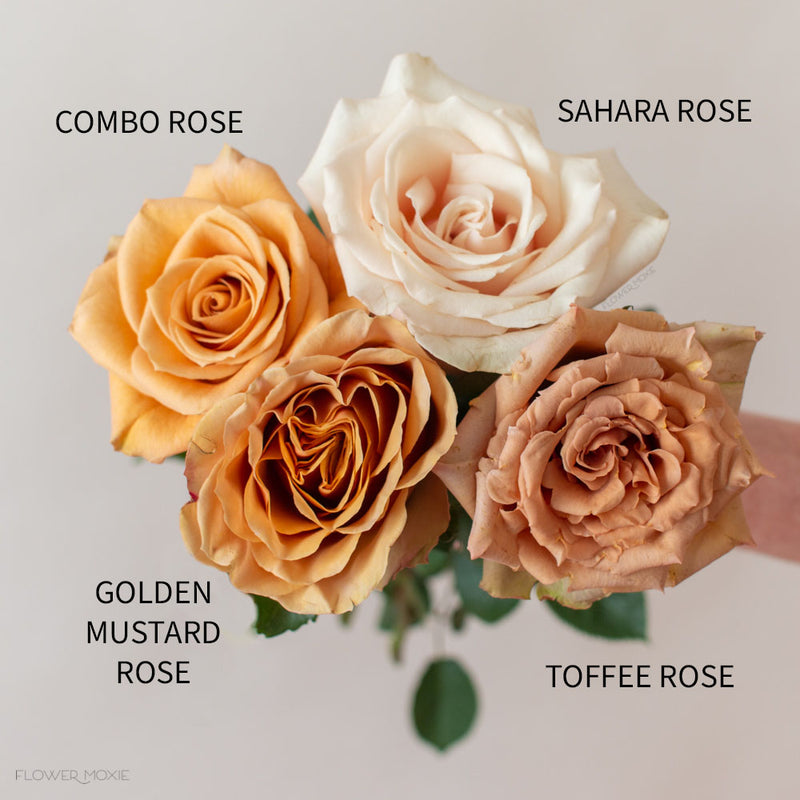 combo rose beige sahara rose golden mustard rose toffee rose