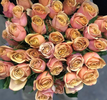 Golden Mustard Garden Rose