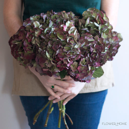 Dark hydrangea, red green hydrangea, variegated hydrangea, diy bride, diy flowers, diy bouquet, diy wedding, diy wedding ideas, flower moxie, what does a bikini rose look like, wedding ideas, make your own bouquet, make your own wedding bouquet, flower moxie