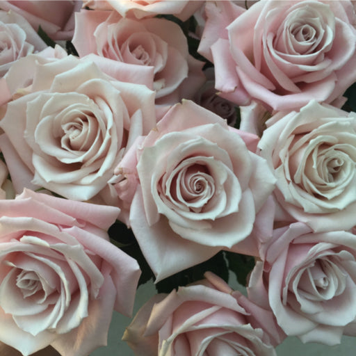 Sweet Escimo Rose | Blush Rose | Flower Moxie | DIY wedding flowers | DIY bridal bouquet | blush and cream wedding