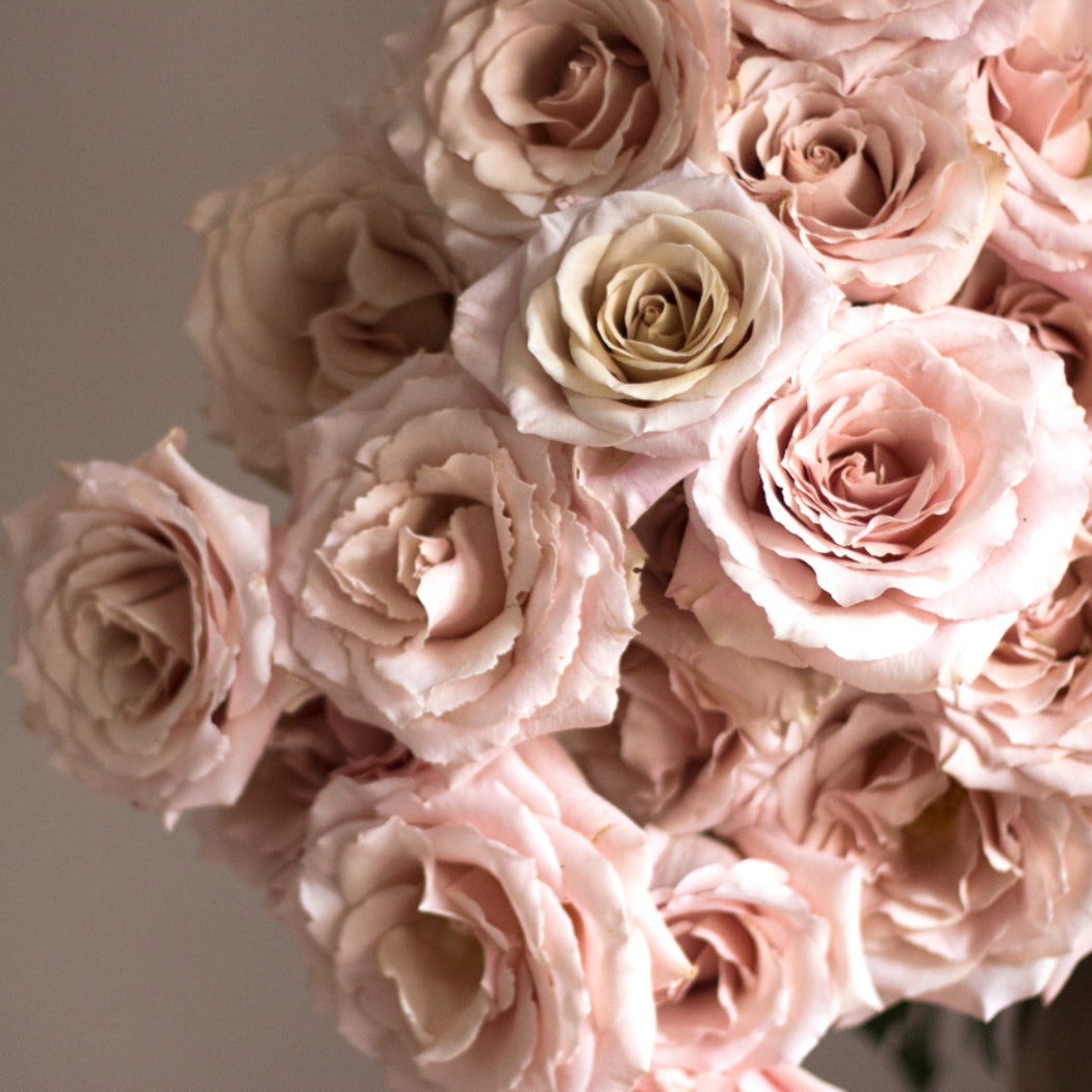 These beauties have a gorgeous dusty color in the center and open to give a similar look as a garden rose! quicksand, dusty wedding colors, muted wedding colors, quicksand roses, flower moxie, diy bride, diy wedding, diy flowers, mauve roses, soft hue roses, diy bridesmaid, diy bridal bouquet