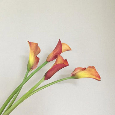 Orange Mini calla lily