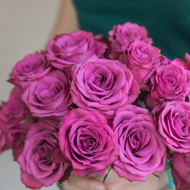 Blueberry Purple Roses
