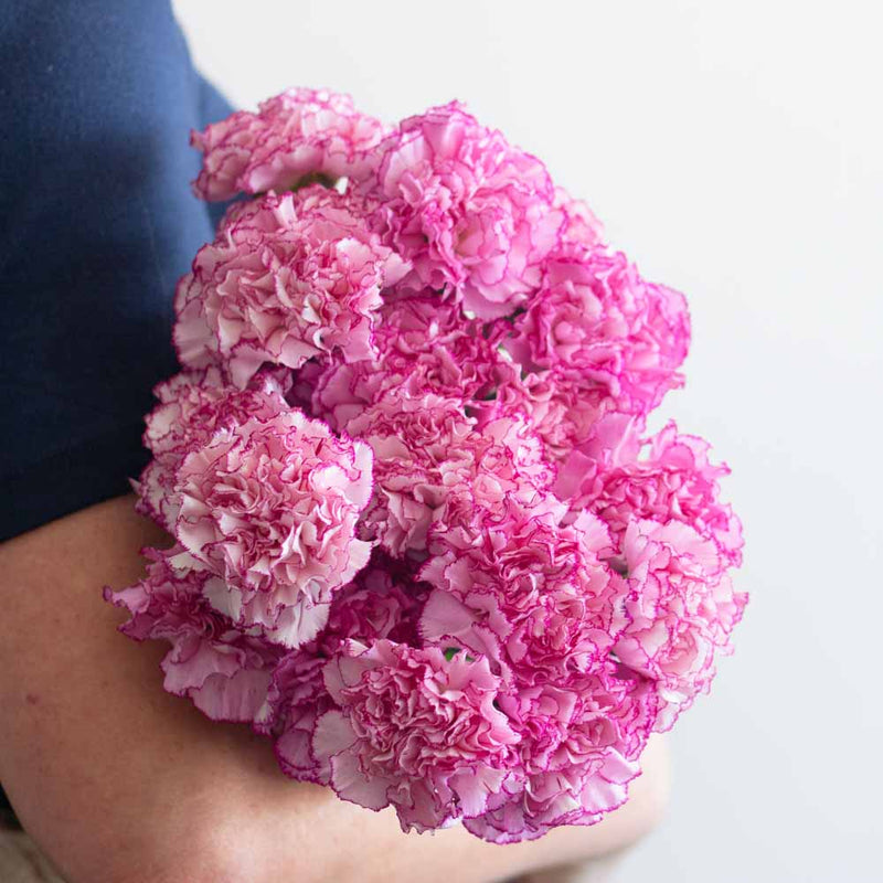 Komachi Fancy Pink Carnations
