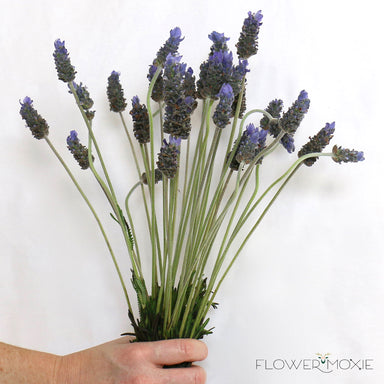 Lavender | Lavender Wedding | Lavender Wedding Bouquet | Flower Moxie