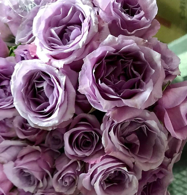 Spray Roses- Lavender