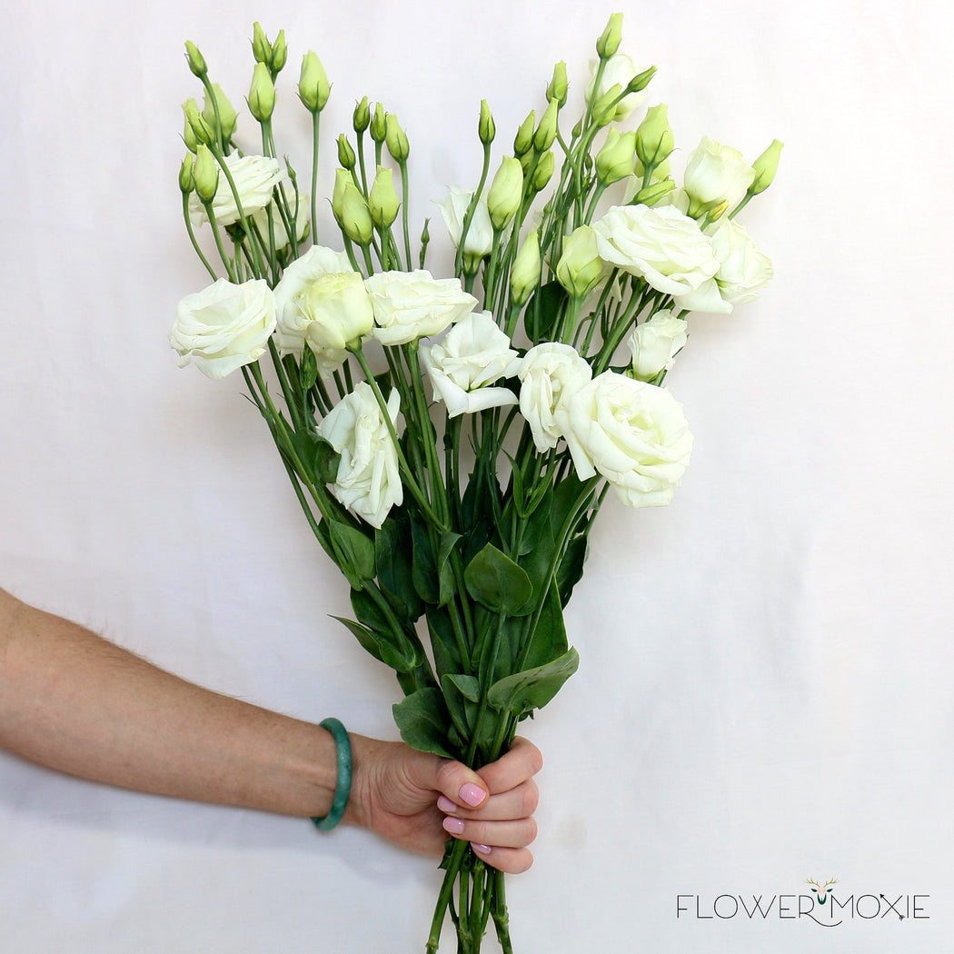 Lisianthus white flower moxie lisianthus white mightylinksfo